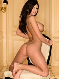Kaytee Bees Delicious Curves 13